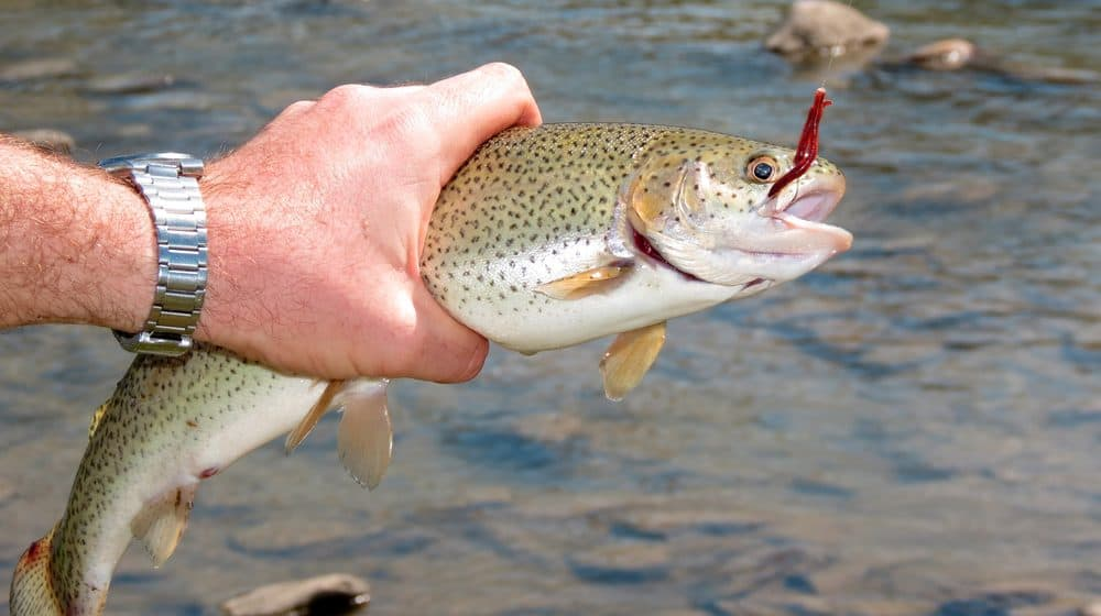 Trout Fishing Techniques
